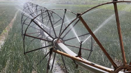 cebula : Irrigation equipment for watering in onion field