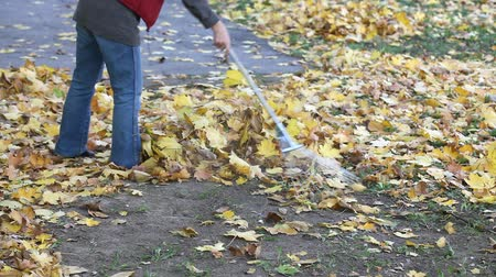 rakás : Mature woman raking leaves in a garden