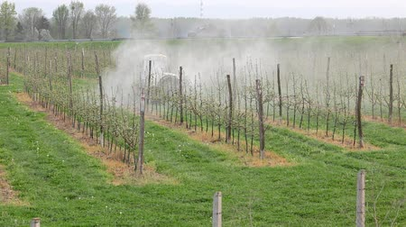 pulverização : Tractor sprays  insecticide or fungicide in apple orchard