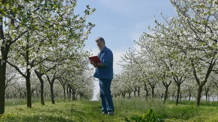 pomar : Agronomist or farmer examine blooming cherry trees in orchard and writing data