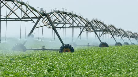 irrigação : Soybean field with Irrigation system for water supply, 4K footage