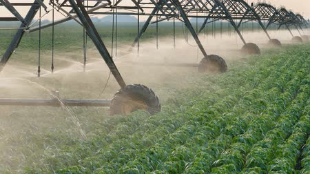 irrigação : Soybean field with moving Irrigation system for water supply, HD footage