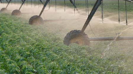 irrigação : Soybean field with Irrigation system for water supply, panning footage Vídeos
