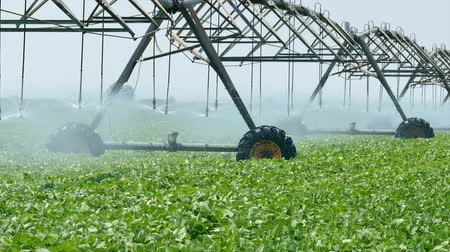 polního : Soybean field with Irrigation system for water supply, zoom out HD footage