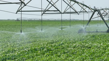 sojový : Soybean field with Irrigation system for water supply, zoom out HD footage