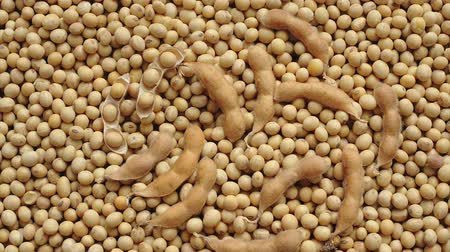 sojový : Closeup  of soybean crop after harvest, zoom out HD footage
