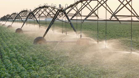 irrigação : Soy bean field with Irrigation system for water supply in sunset