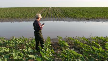 Female farmer inspect young green sunflower plants in mud and water and tuyping to mobile phone, damaged field after flood in spring Stock Footage