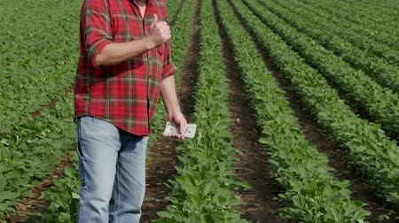 agricultural economy : Farmer counting dollar banknote with green cultivated soy bean field in background Stock Footage