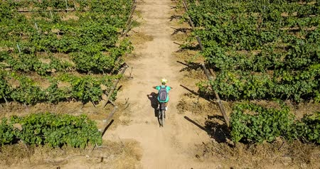 prozkoumat : Vineyard from high point of view. wine production in the country yard. green plants and arid ground with road in the middle. lonely bikers in activity sport on the road