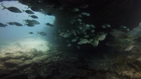 fuerteventura : group of fishes swimming, Fuerteventura Canary Islands Stock Footage