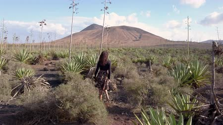 алоэ : girl walking in an agave cultivation Стоковые видеозаписи