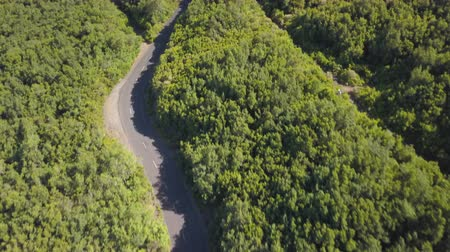enrolamento : Aerial top view of beautiful road through the green forest Stock Footage