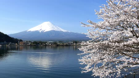 japan : Cherry blossoms and Mount Fuji, Scenery too beauty in Japan.