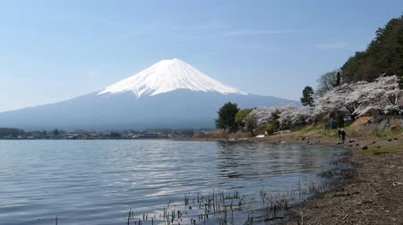 Cherry blossoms and Mount Fuji, Scenery too beauty in Japan.