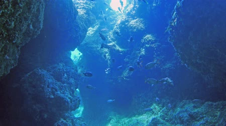 kaland : Cave underwater Adventure world Stock mozgókép