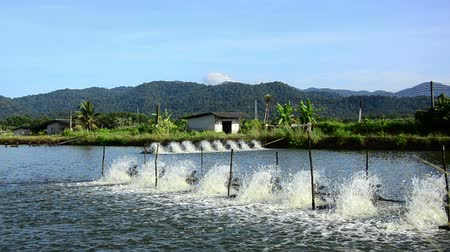 poça de água : water treatment equipment,Water turbines on Shrimp ponds