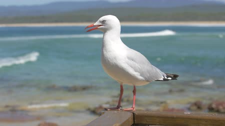 Seagull in front of blue sea, 2x slow motion