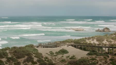 lanscape : Seals at the coastal landscape of the Flinders Chase National Park Stock Footage