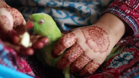 Girl with henna on hands feeding apple to a green pet parrot Стоковые видеозаписи