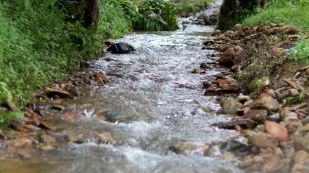 Small river flowing through forest 4K video