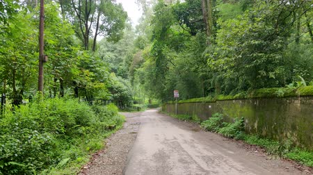 monção : Countryside road with both side covered with trees and green plant
