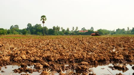 farmer is plowing his farm to prepare plant the jasmine rice with tractor in the morning, Thailand.