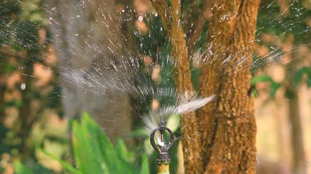 abstract irrigation of agricultural field, water sprinkler