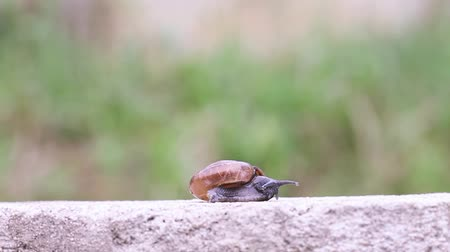 lerdo : Slowing snail on concrete wall.