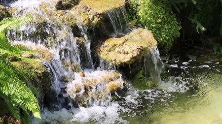 papyrus : waterfall in garden