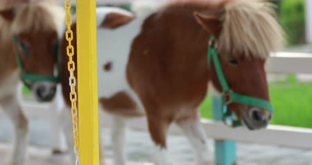 hoof : Miniature pony on a farm