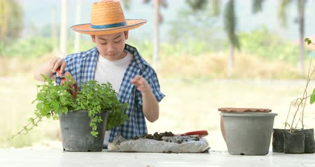locsolás : Young asian Thai boy prepare black soil to little plant on in the garden. Earth day concept.