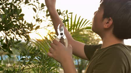 trim : 4K Slow motion of asian teen boy working in garden, Thai boy using scissors cutting green branch in the garden, Child activities in garden.