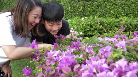 babysitter : Happy asian family mother and son looking at pink flower in park. Recorded hand-held in slow motion at 4K. Stock Footage