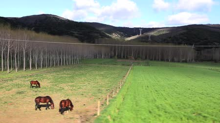 vidéki színhely :  Landscape of meadows, groves and poplars with filtered light. They are horses and cows grazing. Traveling from car side. Early spring. Leon. Spain