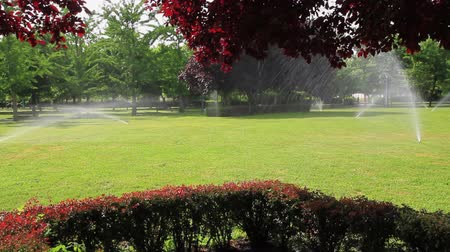 biloba : Sprinkler irrigation in a public park with green grass hedges and trees of different species