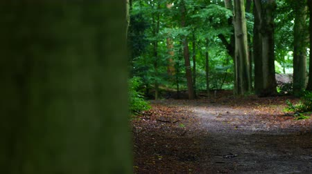 sürgülü : Sliding view in a green forest with a path during a rainy day.