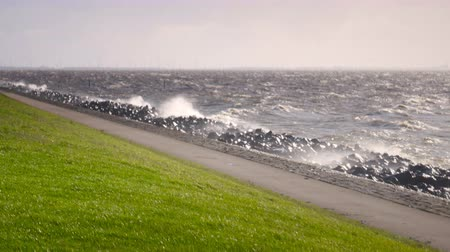 levee : Levee in an October fall storm at the IJsselmeer in The Netherlands. Stock Footage