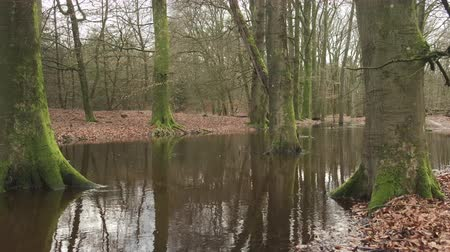 Overflowing Leuvenum forest creek after heavy rains in the Veluwe nature reserve in Gelderland, The Netherlands. Стоковые видеозаписи