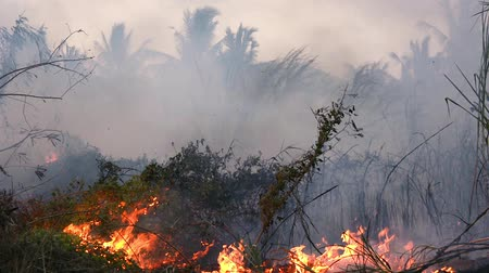 Wildfire while drought close-up flame. Smoke Pollution from agricultural fields.