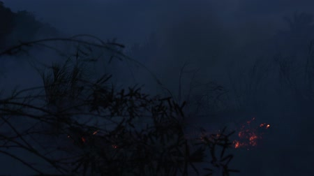 Wildfire while drought at night, close-up. Smoke and air Pollution from agricultural burning farm fields. Stok Video