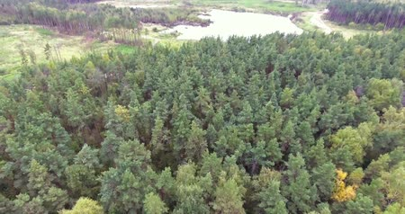 sc : flying over trees and pond in forest Stock Footage
