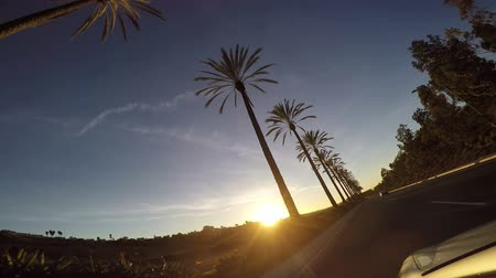 řídit : This is a video taken from a car driving past a line of palm trees at sunset in southern California San Diego