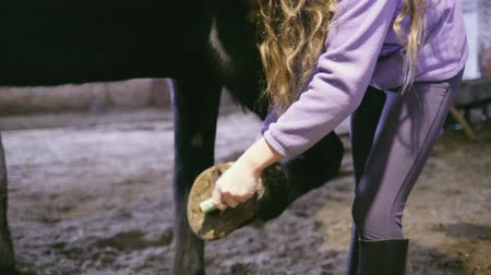 Young rider girl clean out dirt from hooves
