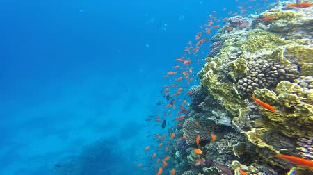 Small colorful fish near coral reef in Red sea