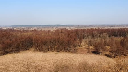 yassı : Ukrainian countryside landscape in the spring Stok Video