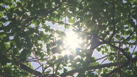napfény : Sun through green leaves