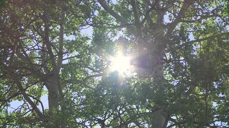 sustentável : Sun through windy trees Stock Footage