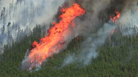 silvicultura : Forest fire with huge flames