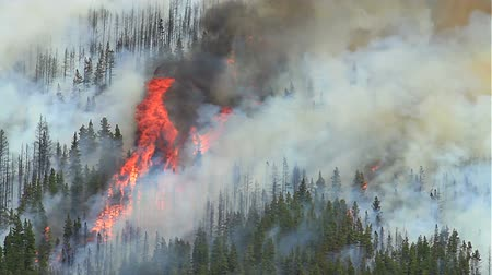 pincel : Forest fire with huge flames and smoke